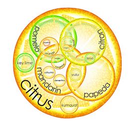 What is an orange? (Cut Squash)